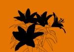 Lilies shadows